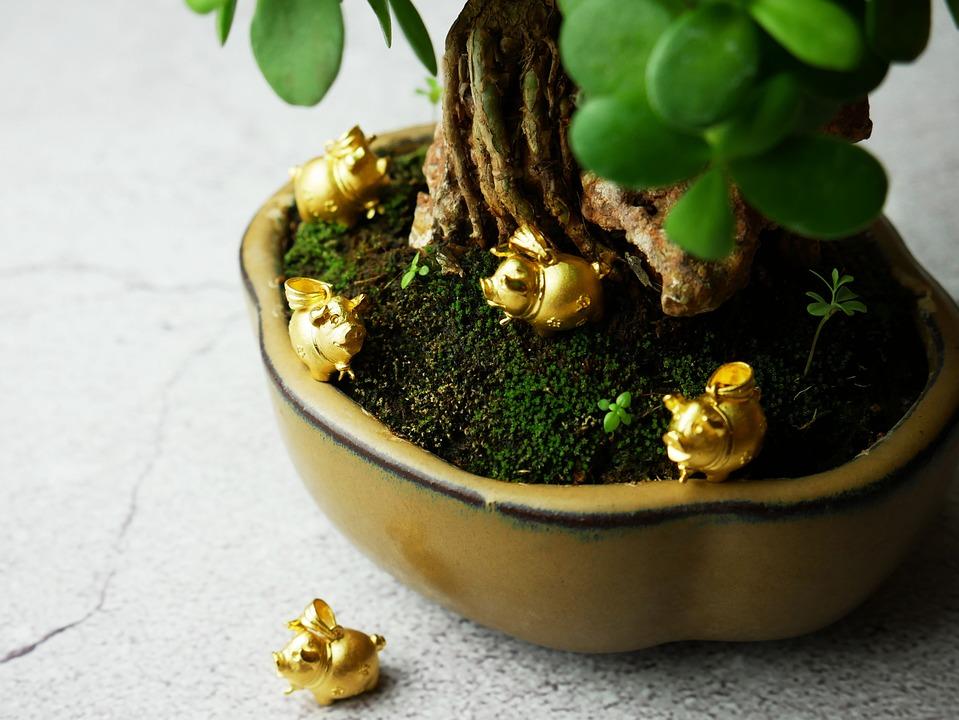 ทอง, ทองคำ, หมู, ต้นไม้