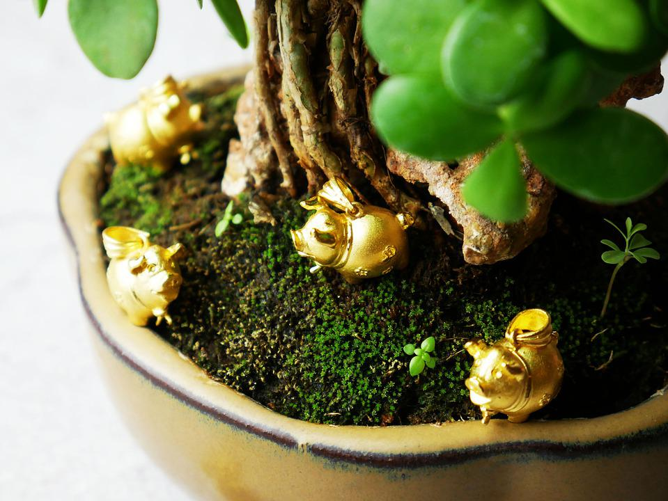 ทองคำ, ทอง, หมู, ต้นไม้