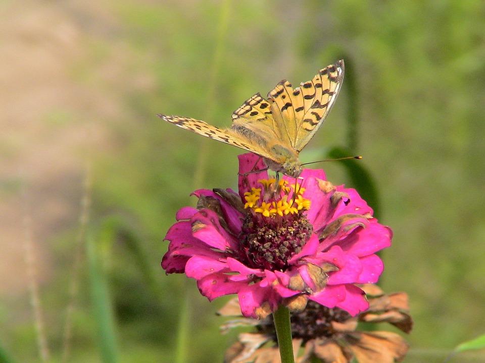 China, 2006, Fengcheng, Butterflies
