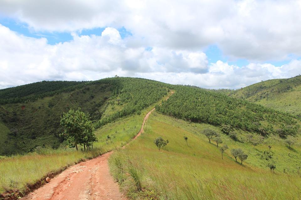Pfp, Landscape, Aforestation, 2016