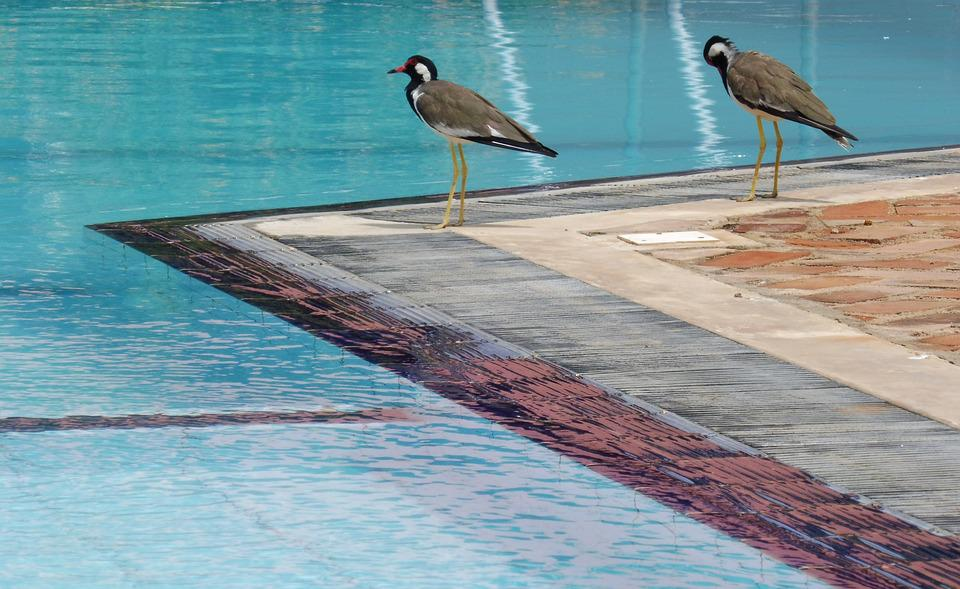Bird, Water, Blue, Birds, A Couple Of, Pool