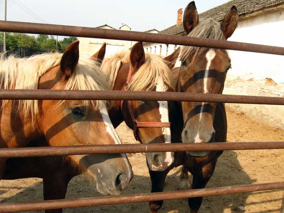 Horses, Mares, Stallions, A Foal