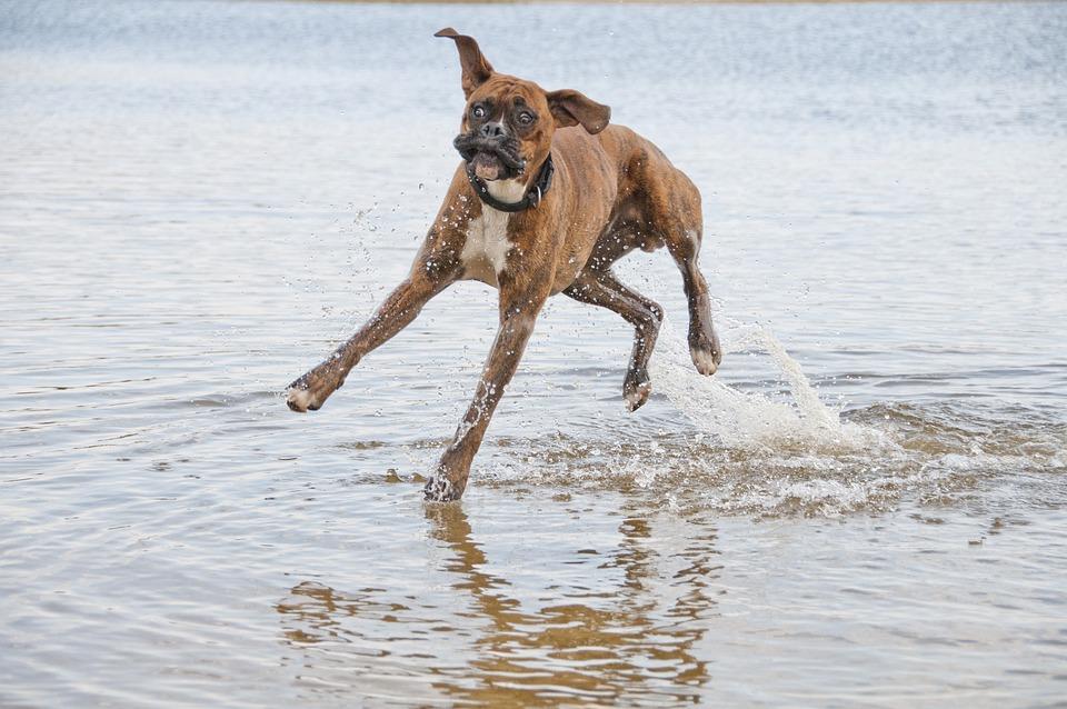 Animal, Dog, Snout, Friendship, Fun, A Friend Of Man