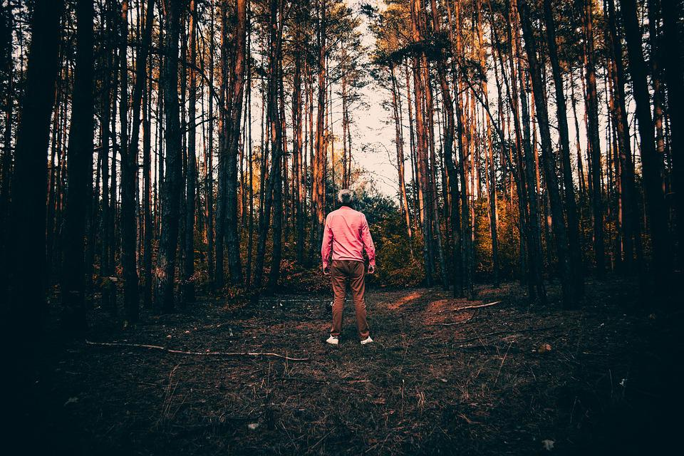Man, A Person, People, Male, Forest, Autumn, Tree
