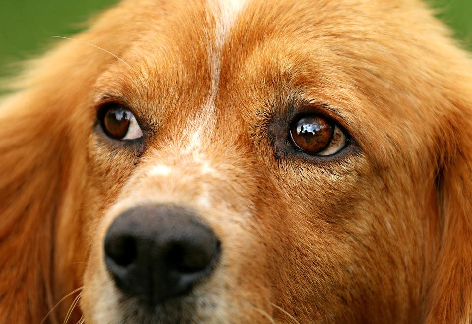 Dog, Eyes, View, Sorrow, A Pity, Kindness, Each