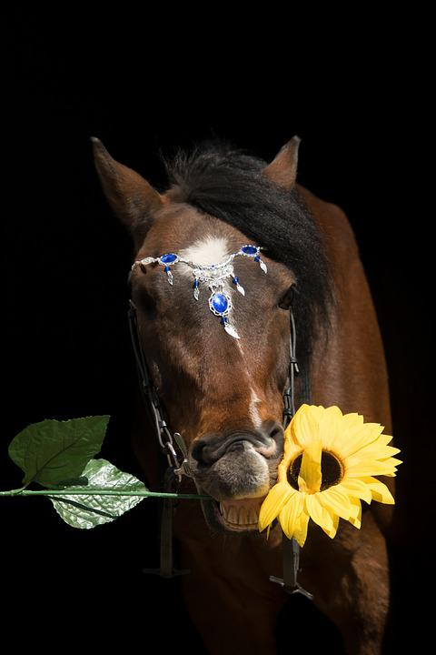 Nature, Animal, A, Mammal, Portrait, Sunflower, Flower