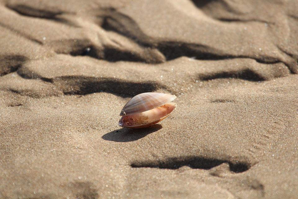 Abandoned Shells, Low Tide, Ocean, The Sea Bottom, Sand