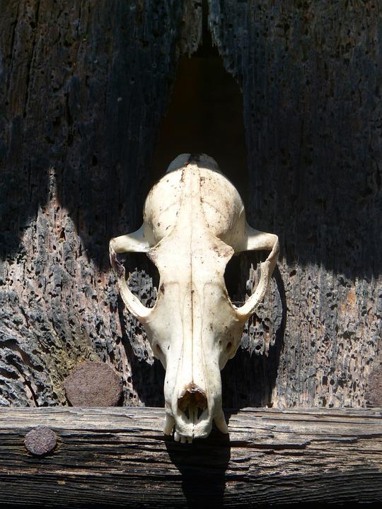 Skull, Skull Of Goat, Death, Door, Abandoned, Terror