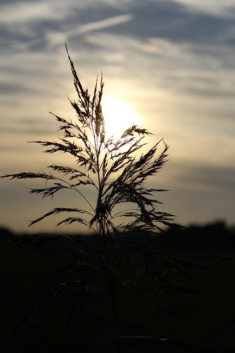 Abendstimmung, Sun, Sky, Background, Plant, Sunset