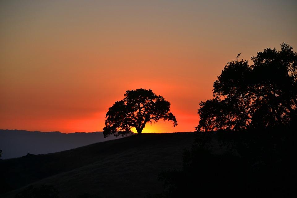 Twilight, Sunset, Tree, Abendstimmung, Himmelröte