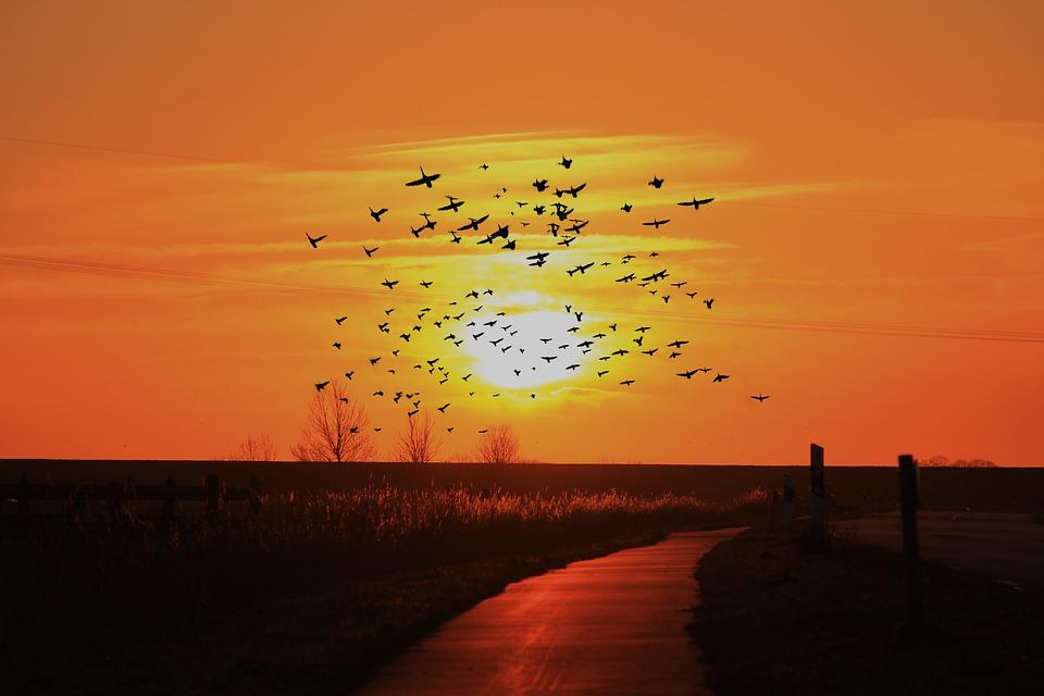 Sunset, Sun, Abendstimmung, Sky, Romance, Evening Sky