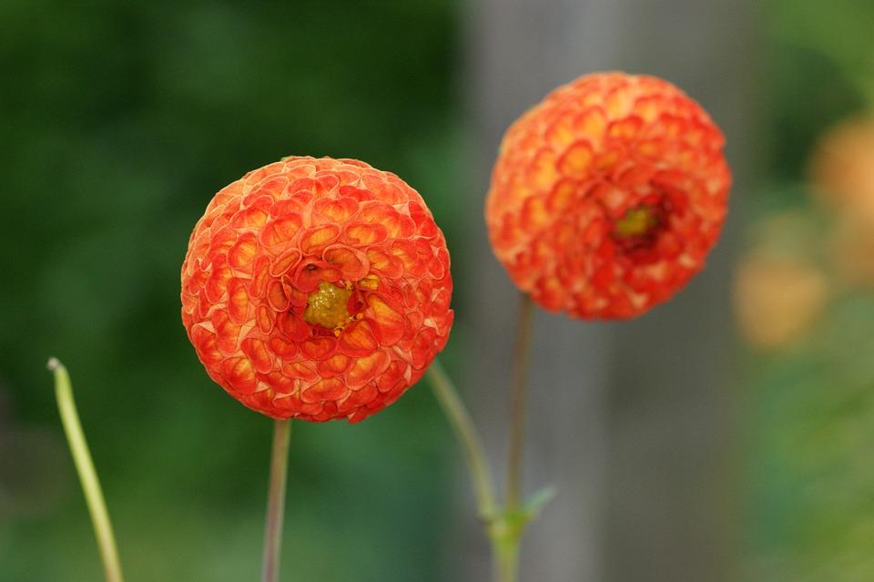 Flowers, Nature, About, Orange, Flower, Summer, Filled