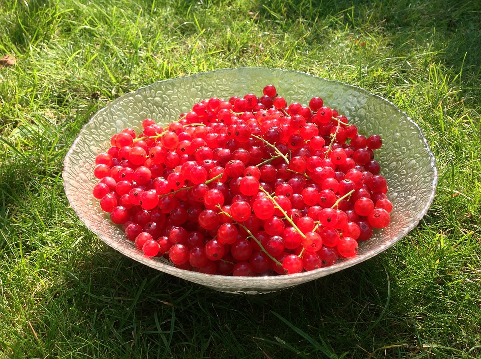 Currants, Red, About, Harvest, Glass Bowl, Green, Sour
