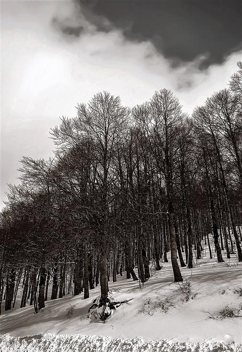Abruzzo, Lazio, National Park, Snow, Winter, Italy