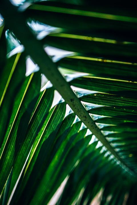 Abstract, Close-up, Color, Detail, Flora, Foliage