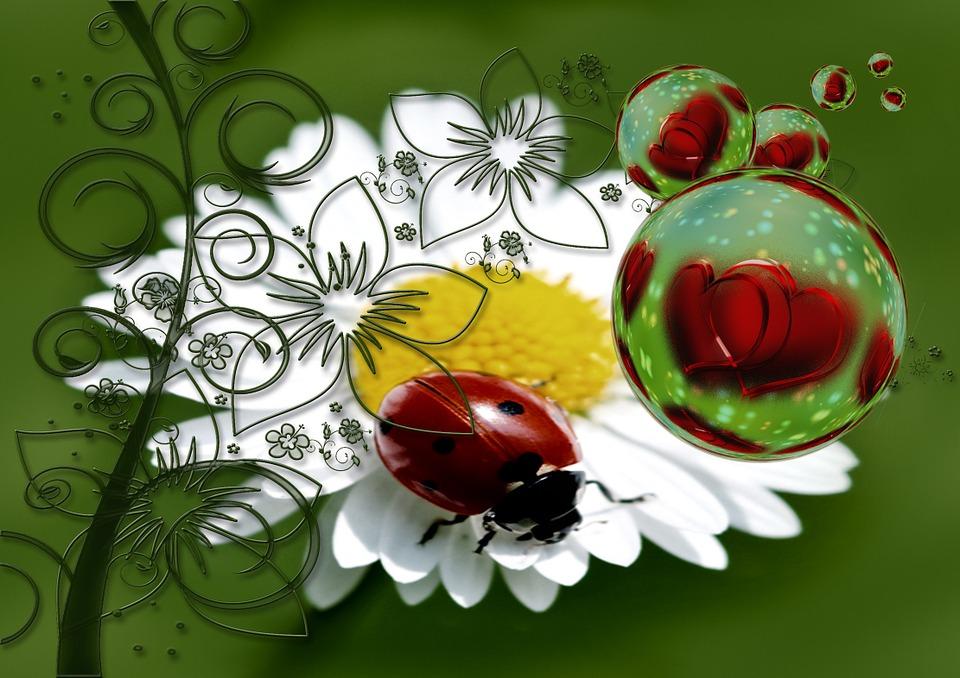 Ladybug, Heart, Love, Luck, Abstract, Greeting