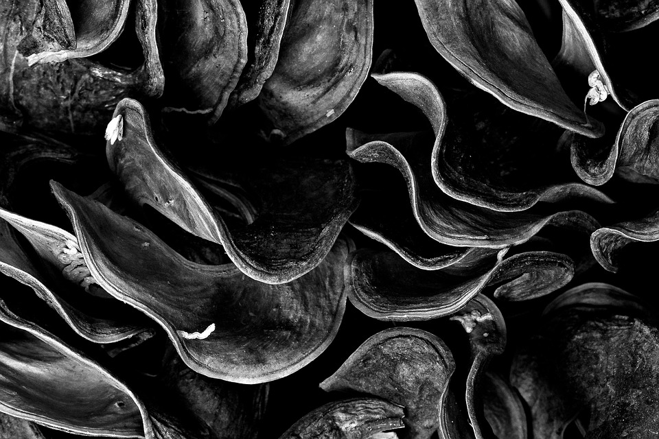 Macro, Micro, Abstract, Leaf, Black, White