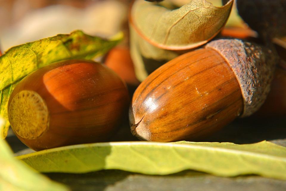Acorns, Macro, Close, Leaves, Autumn, Decoration, Brown