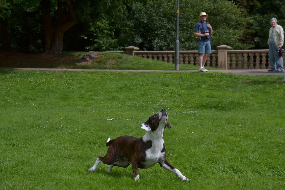 Animal, Dog, Action, Companion, Friendship, Happy, Pet