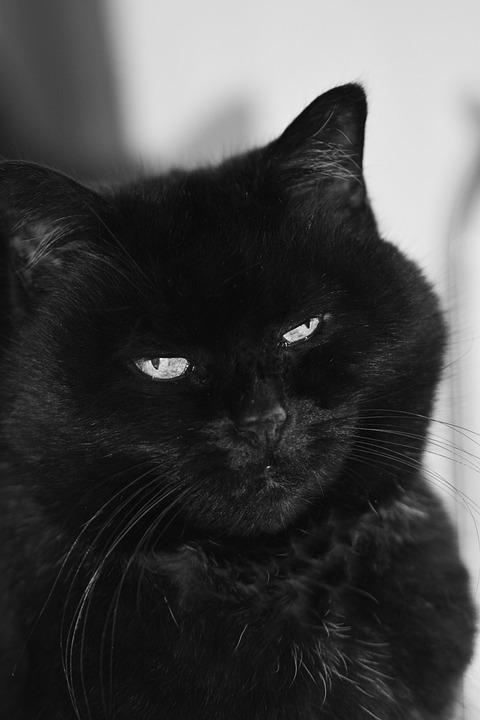 Cat, Black And White, Adidas, Animal