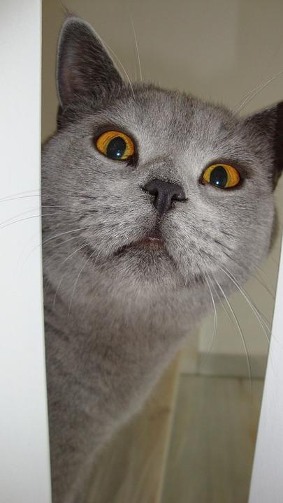 Cat, View, Adidas