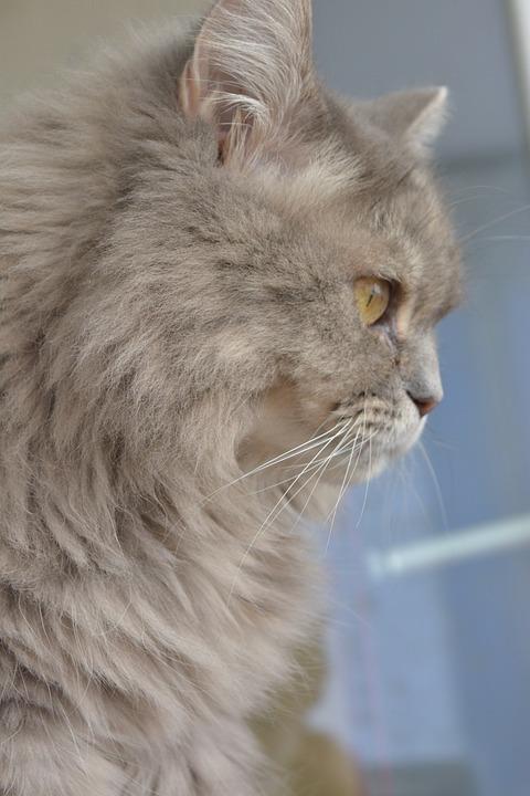 Cat, Grey, Domestic Cat, Mieze, Fur, Cute, Adidas