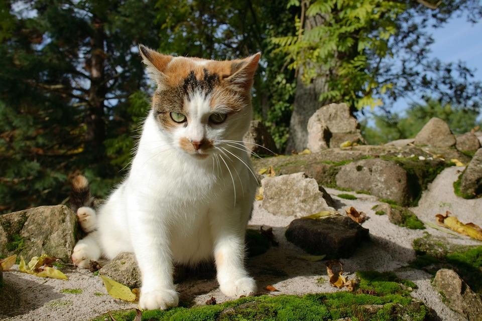 Cat, Nature, White, Adidas, Cute, Pet, Kitten, Fur