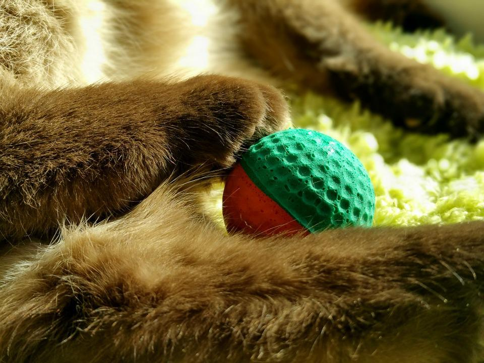 Cat, Paws, Play, Ball, Adidas