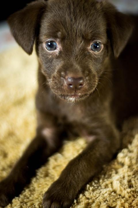 Dog, Puppy, Adoption, Animals, Animal, Pet, Beautiful