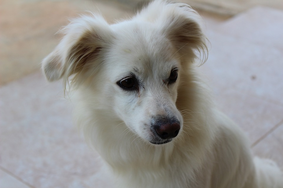 Dog, Puppy, White, Pet, Cute, Animal, Canine, Adorable