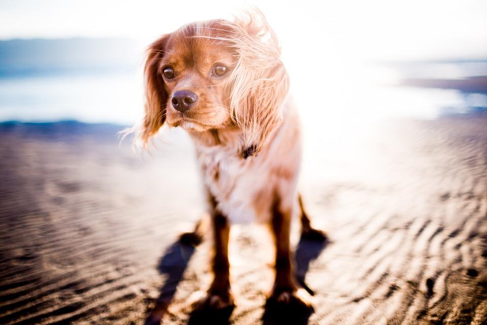 Adorable, Animal, Animal Photography, Blur, Canine