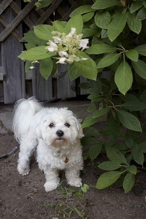 Dog, Puppy, Canine, Pet, White, Adorable, Purebred
