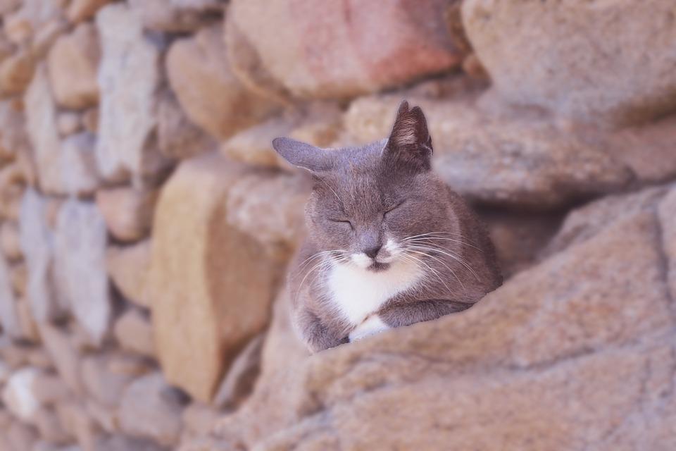 Cat Asleep, Furry Grey Cat, Cute, Adorable