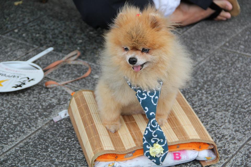 Dog, Pet, Cute, Animal, Happy, Friend, Fur, Adorable