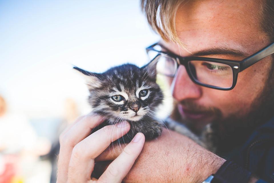 Adorable, Animal, Cat, Cute, Feline, Kitten, Man, Pet