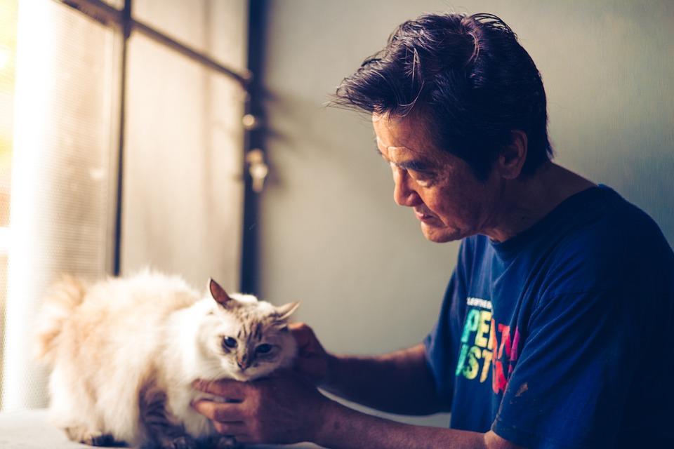 Pet, Cat, Animal, Cute, Portrait, Adorable, Fluffy
