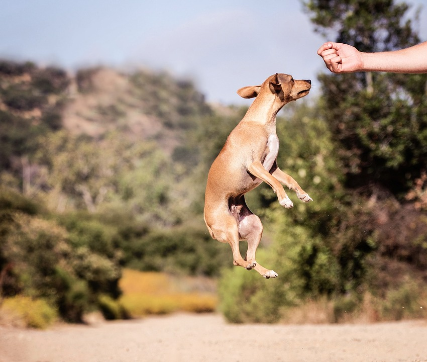 Outdoors, Dog, Nature, Animal, Jump, Adorable, Cheerful