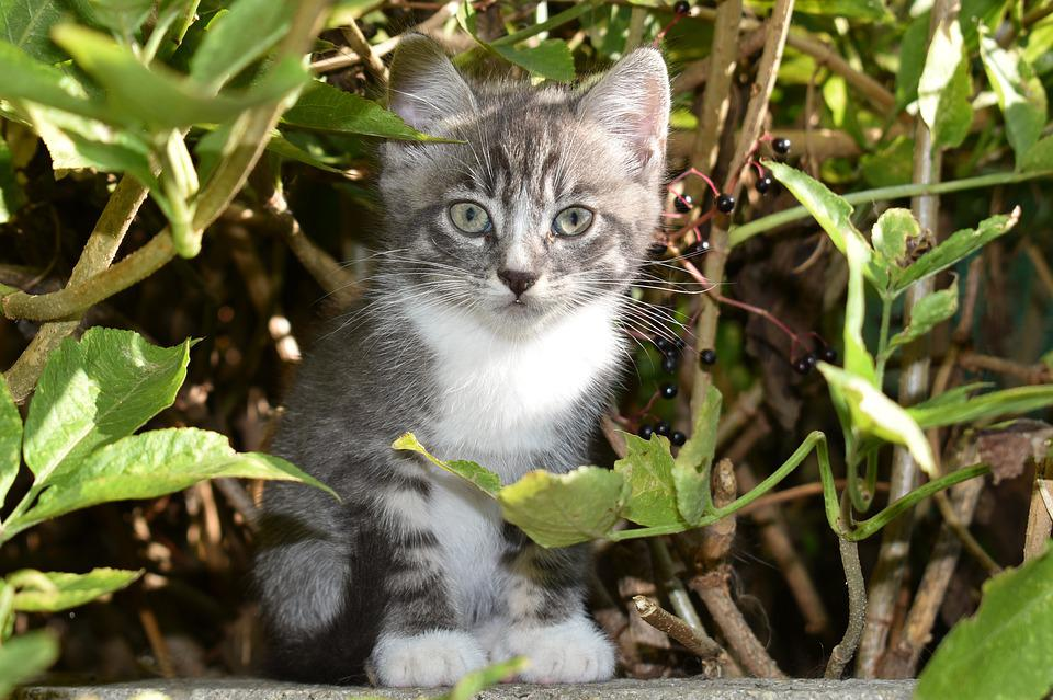Kitten, Grey, Adorable, Baby, Cats, Young, Surprised