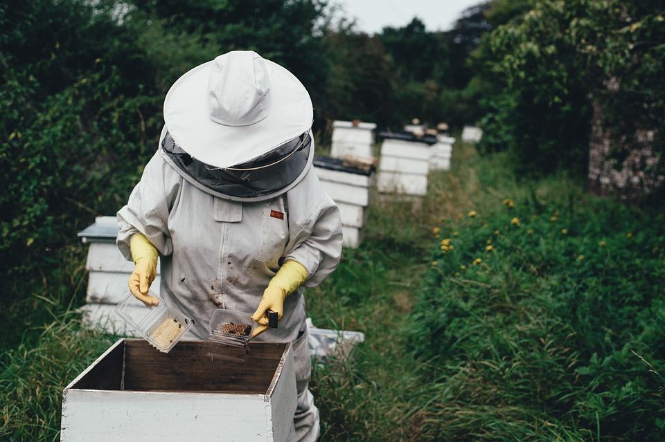 Adult, Apiary, Bee, Bee Farm, Beehive, Beeswax, Garden