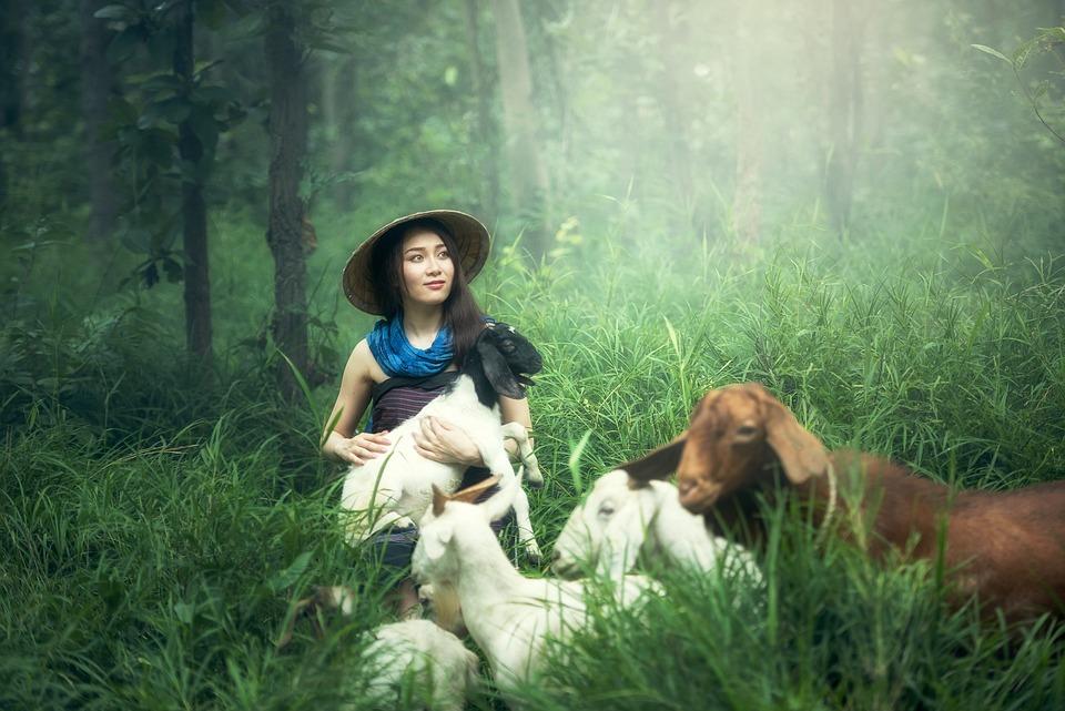 Goat, Farm, Adult, Animals, Asia, Background, Pretty