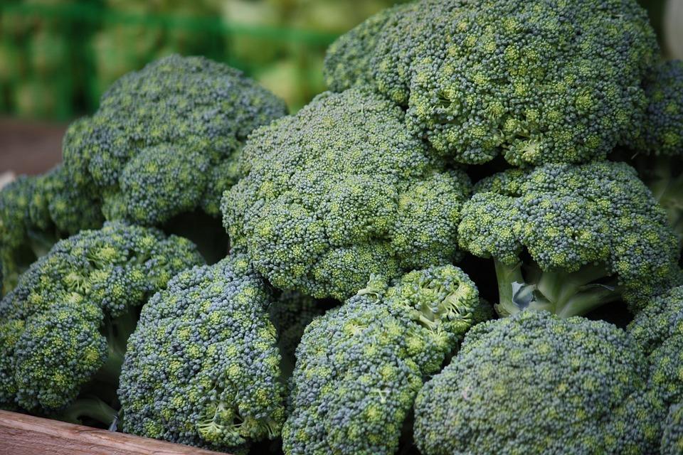 Green, Broccoli, Healthy, Vegetable, Food, Adult