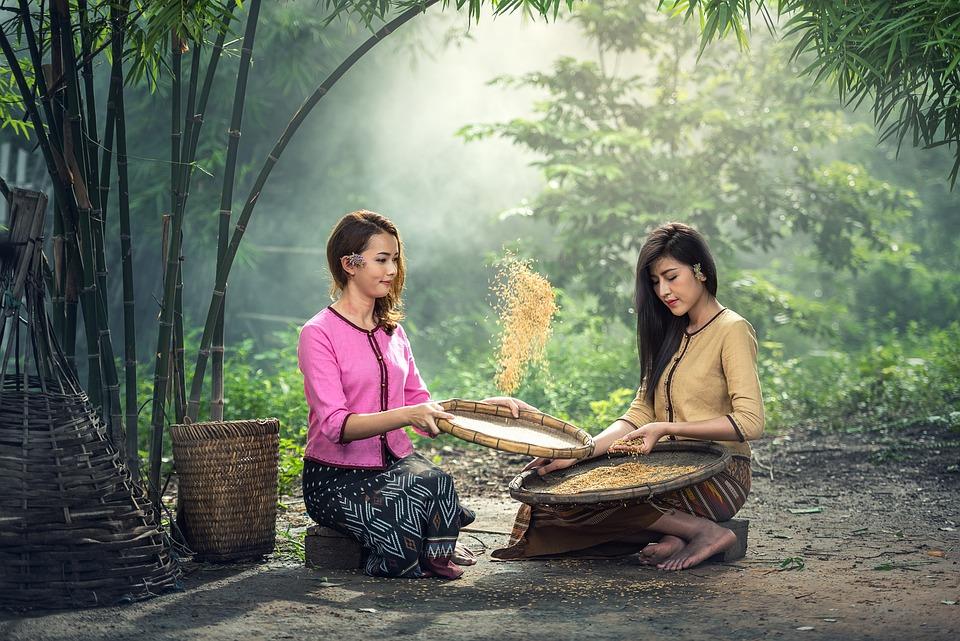 Rice, Women, Sitting, Harvest, Sow, Sieve, Adult, Asia