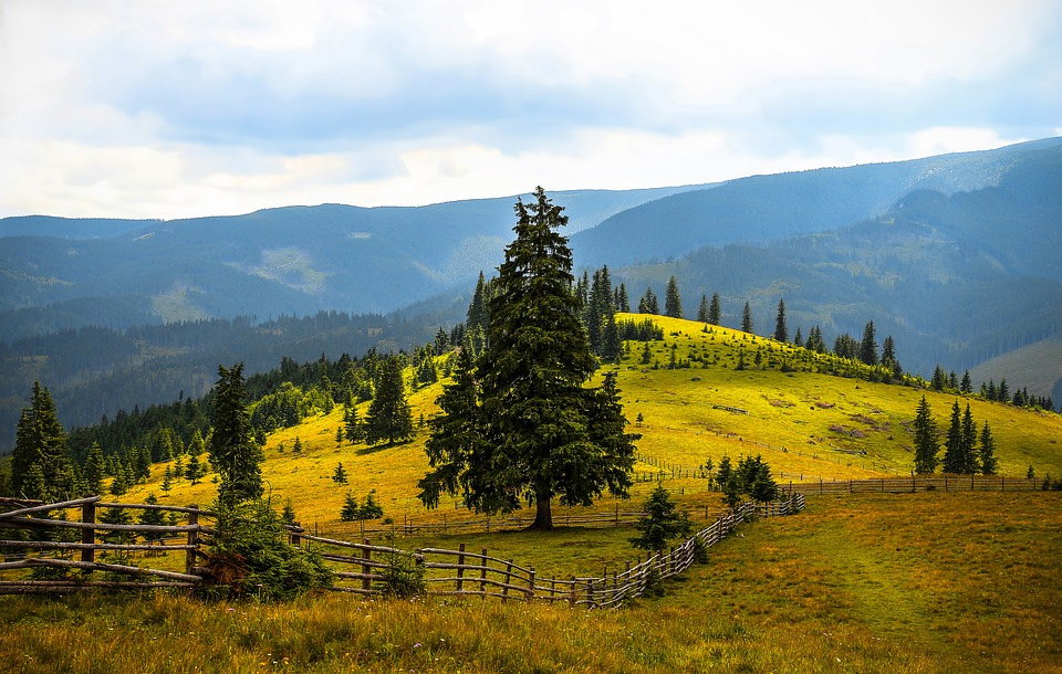Summer, Mountain, Trees, Nature, Landscape, Adventure