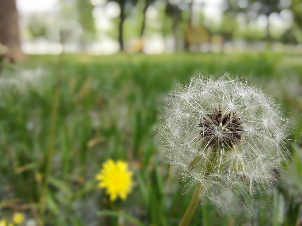 Beijing, Dandelion, Life, Seeds, Aerospace, Aeronautics