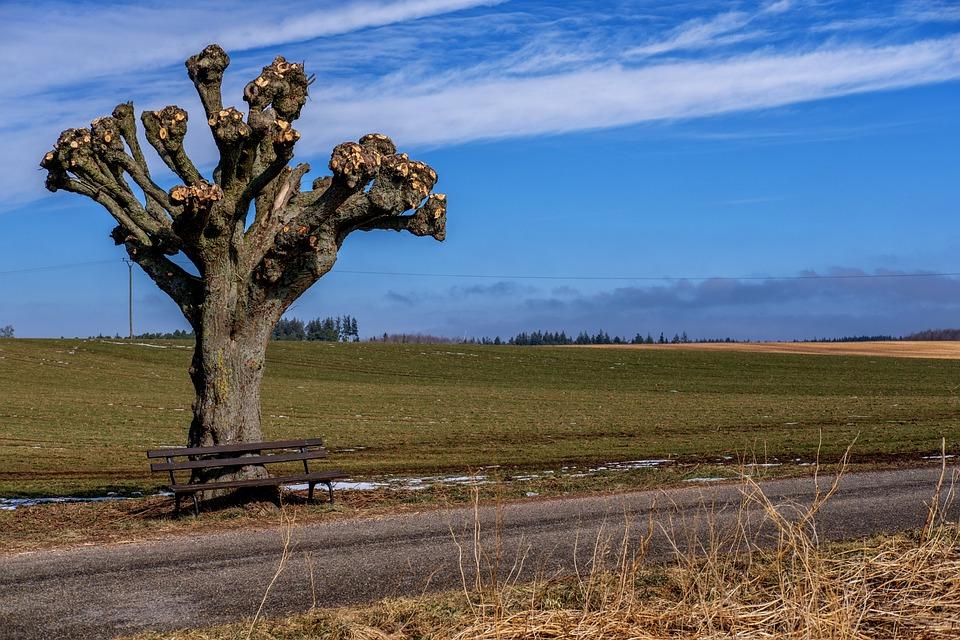 Tree, Aesthetic, Kahl, Beschnitten, Shaved, Mutilated