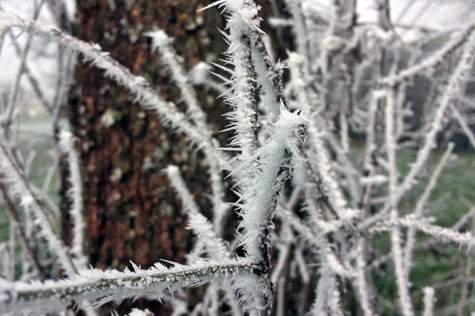 Frost, Aesthetic, Cold, Nature, Frozen, Branch, Snow