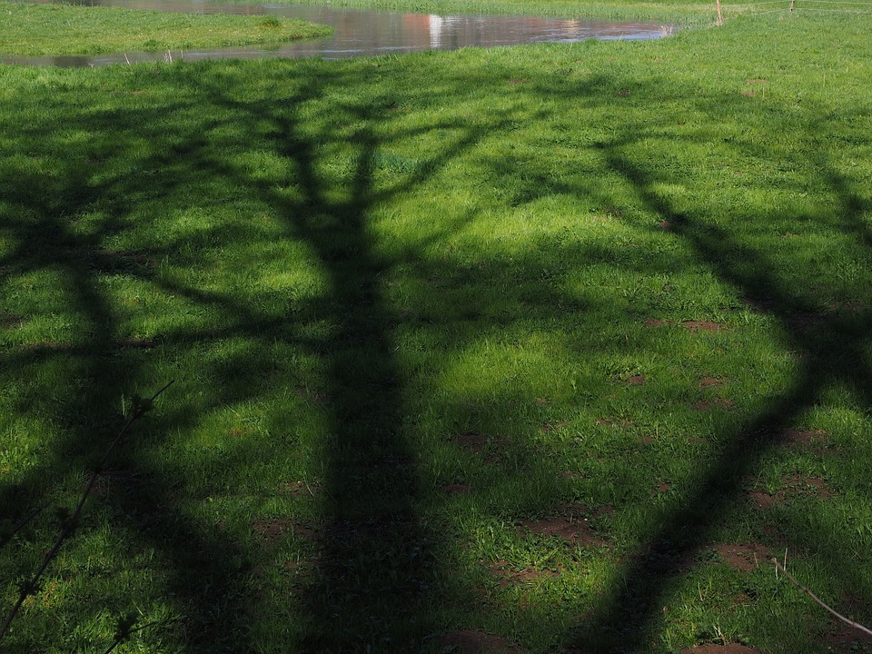 Tree, Shadow, Hispanic, Aesthetic, Meadow, Green