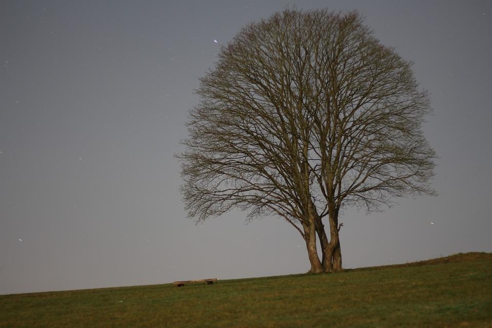 Tree, Night, Meadow, Dark, Aesthetic, Evening, Nature