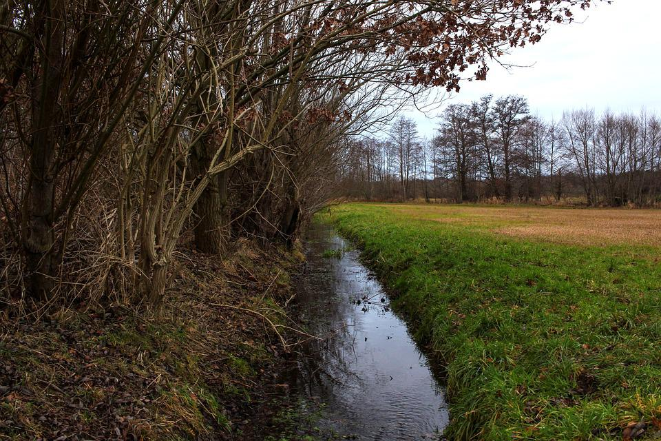 River, Water, Meadow, Aesthetic, Trees, Field, Forest