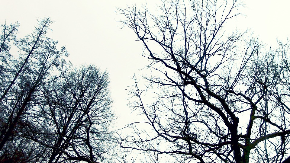 Trees, Forest, Aesthetic, Nature, Wood, Silhouette